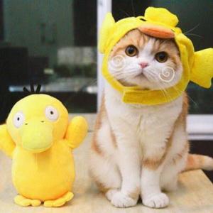 猫咪可爱搞怪微信头像6图片