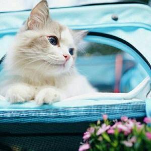 呆萌猫咪可爱微信头像