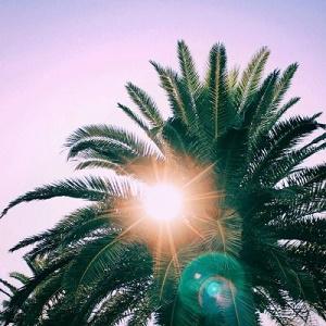 透过树阳光刺眼风景头像