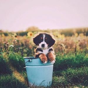 野外一只小狗将爬出桶子风景头像