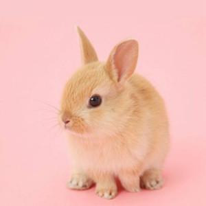 壁纸 动物 兔子 300_300