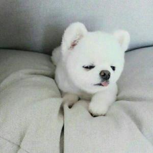 个性可爱狗狗微信头像