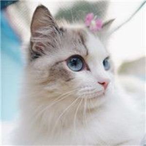个性软萌猫咪微信头像