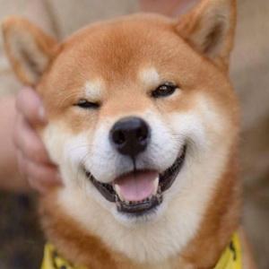 超萌超可爱的柴犬微信头像11