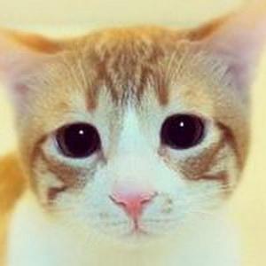 少女心爆棚的可爱猫咪微信头像3