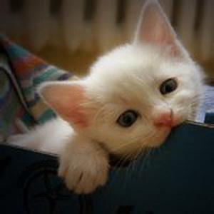 少女心爆棚的可爱猫咪微信头像12