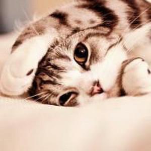少女心爆棚的可爱猫咪微信头像15