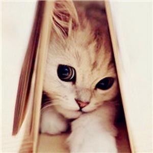 少女心爆棚的可爱猫咪微信头像21