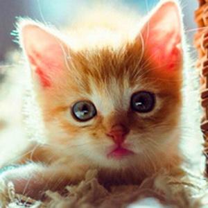 历趣 微信头像 可爱头像 委屈脸大眼萌猫微信头像11  手机扫码下载 上