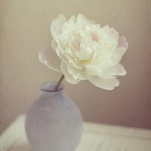 花儿如此多娇风景微信头像6图片