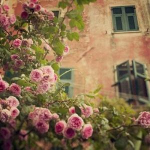 历趣 微信头像 风景头像 最美花朵风景头像4  手机扫码下载 上一张  5