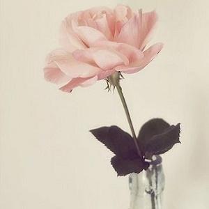 最美花朵风景头像5