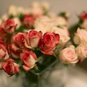 最美花朵风景头像11