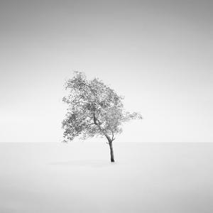 堅強的樹黑白風景頭像