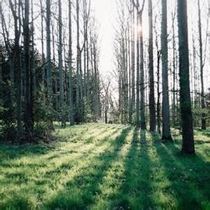 森林唯美风景头像-微信头像