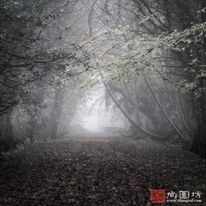 黑白森林照风景头像