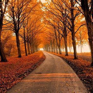 秋天落叶枯黄风景头像1