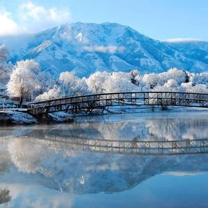 雪山银树风景头像