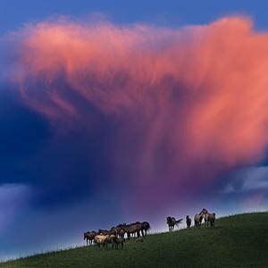 草原上的马风景头像-微信头像