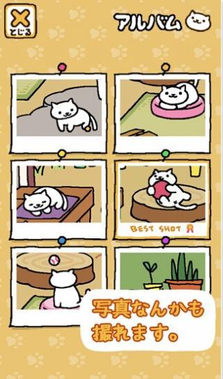 猫咪后院截图2