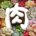 多肉植物app app icon图