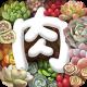 多肉植物app