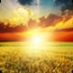 阳光高考app